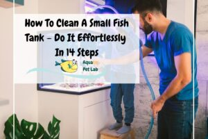 How To Clean A Small Fish Tank – Do It Effortlessly In 14 Steps