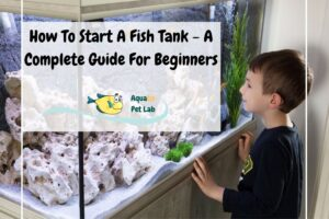 How To Start A Fish Tank - A Complete Guide For Beginners