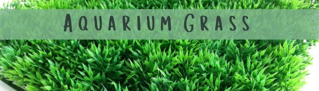 How To Plant Aquarium Grass