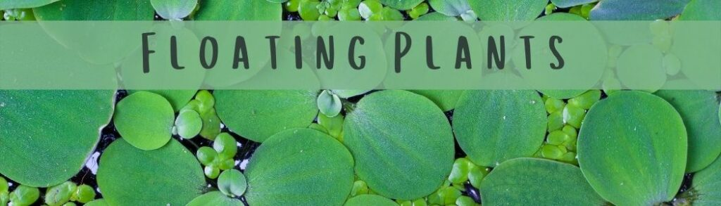 How To Plant Floating Plants