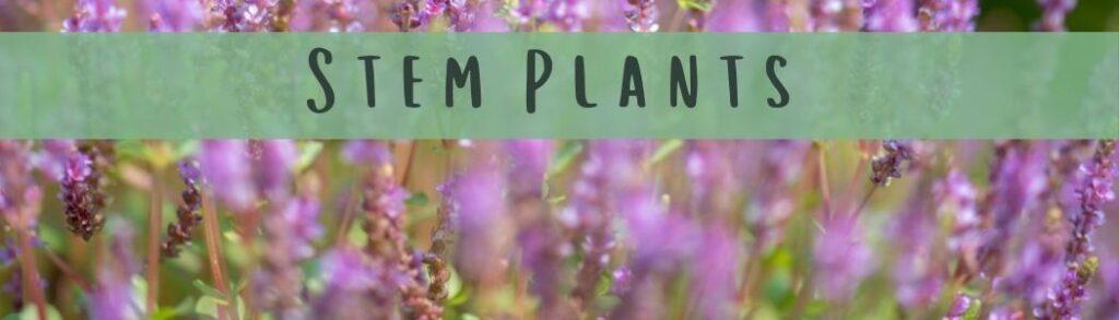 How To Plant Stem Plants