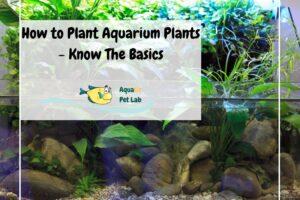 How to Plant Aquarium Plants - Know The Basics