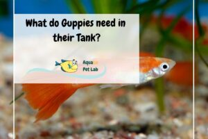 what do guppies like in their tank